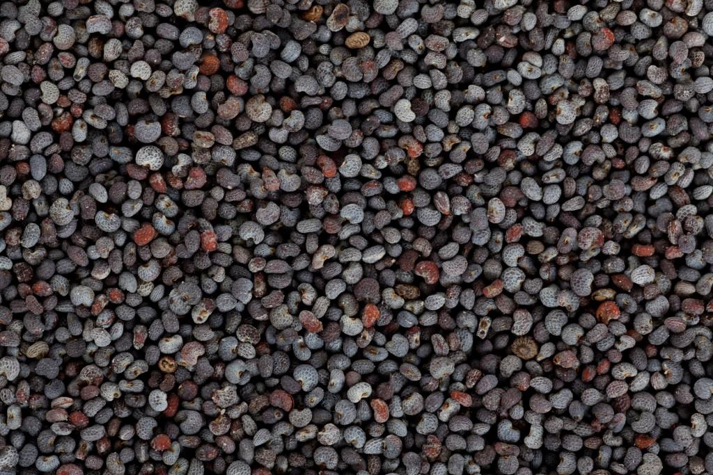 poppy-seeds-texture